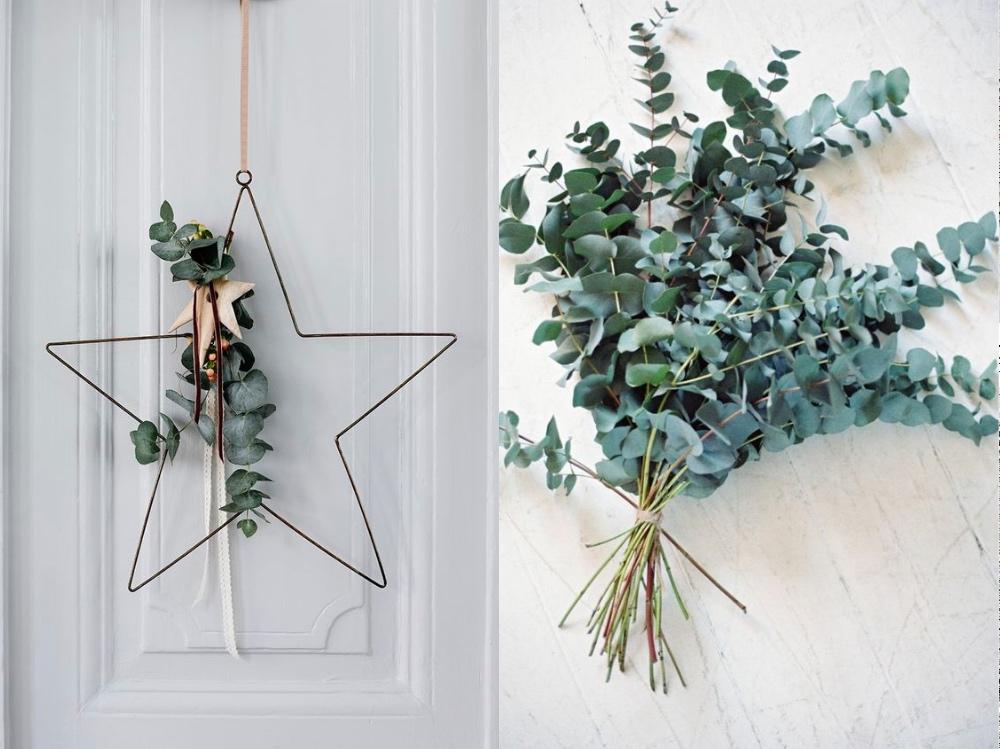 eukaliptusd