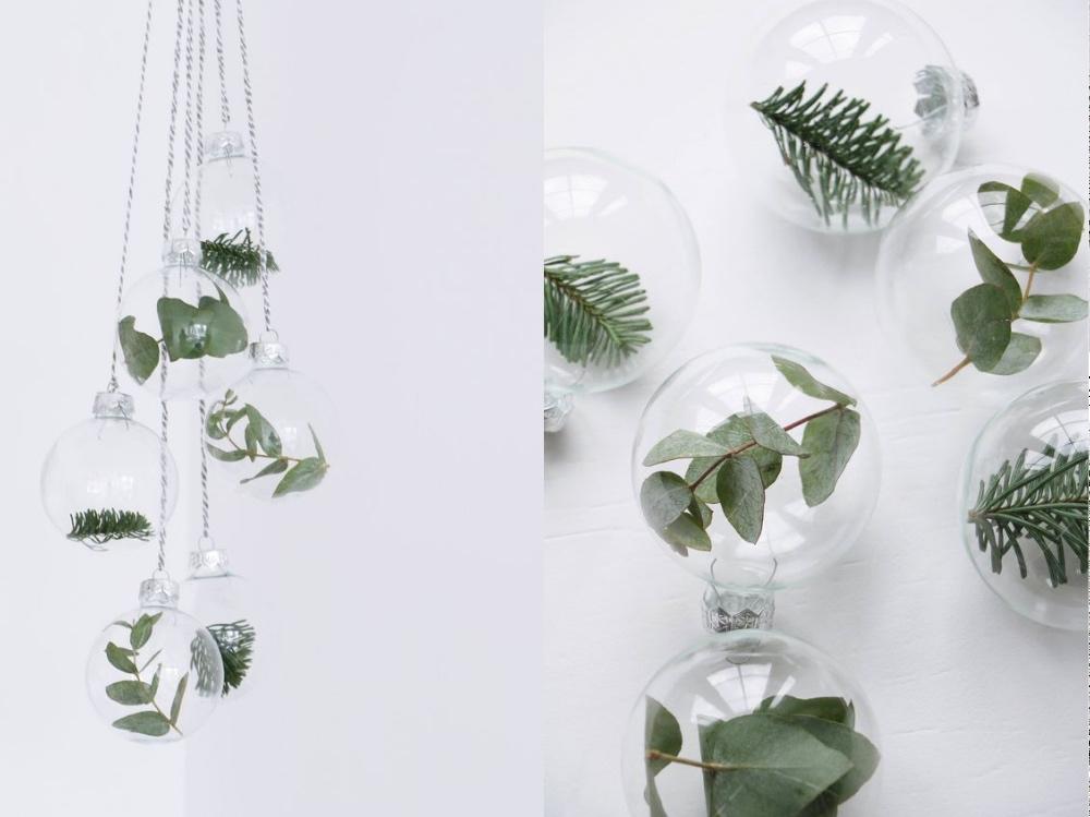eukaliptuse