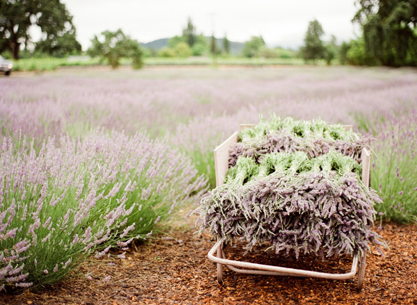 sonoma_lavender_ktmerry_04-copy