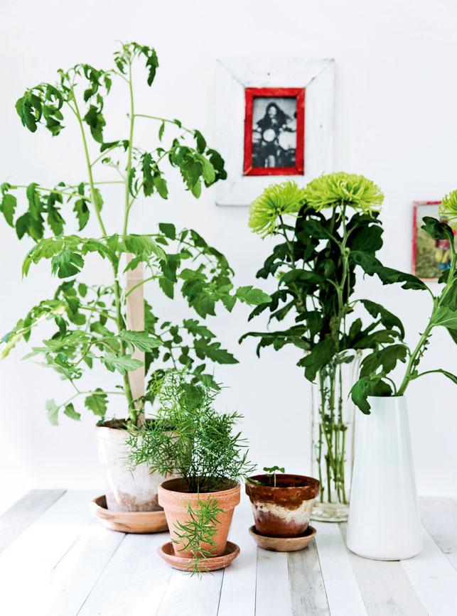 09_groenne_planter